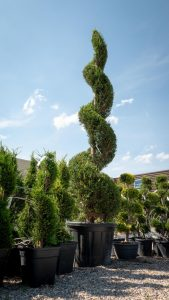 Plantation arbuste Valence