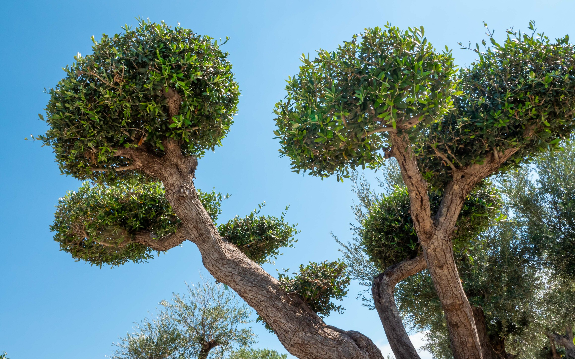 Plantation d'arbre Ouest Lyonnais