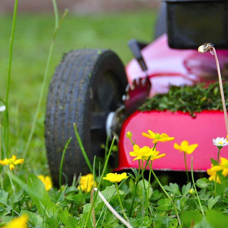 Tonte de pelouse Condrieu
